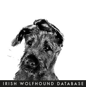 IWDB Infosite