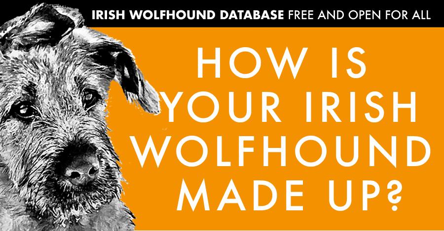 The makeup of an Irish Wolfhound